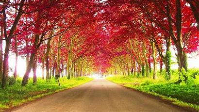 Autumn Nature Trees Road Between During Daytime