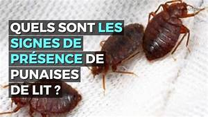 Fumigène Punaise De Lit : punaises de lit comment d tecter leur pr sence youtube ~ Melissatoandfro.com Idées de Décoration