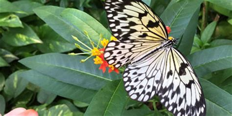 85876 Westminster Butterfly Pavilion Coupon by 5 Admission To Butterfly Pavilion On November 12th