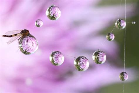 photographer captures insects resting  raindrops