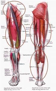 Narrates An Animated Tutorial De Anatomy Of The Human Hip