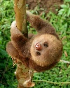 AWW isn't that cute! Yeah, not really because sloths are ...