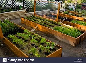 Raised Vegetable Garden Beds Lasagne Garden With Screened Covers To Stock Photo
