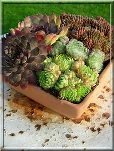 Entretien Plantes Grasses : les plantes grasses sont des fleurs d 39 entretien facile blog de leonor974 ~ Melissatoandfro.com Idées de Décoration
