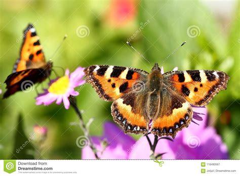 farfalle e fiori farfalle e fiori immagine stock immagine di vivere