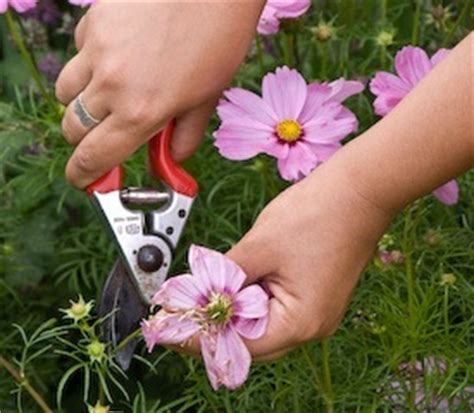 deadheading refers to gardening tips and guide december 2008