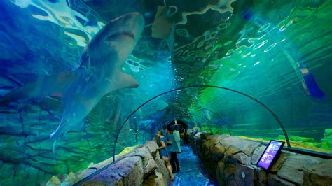 the sea aquarium sea sydney aquarium in sydney new south wales expedia