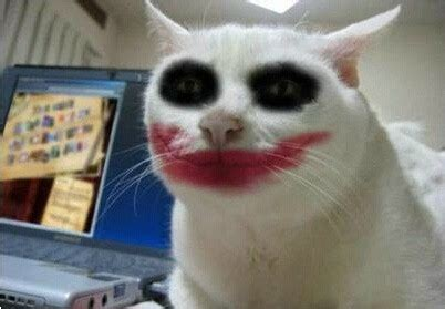 pictures  cats wearing makeup     facebook friend smile cats