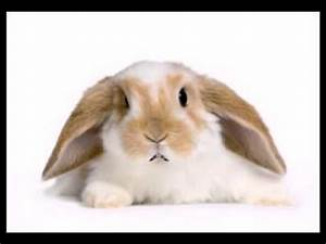 Funny Mother's Day Song (Hip/Hop the Bunny) - YouTube
