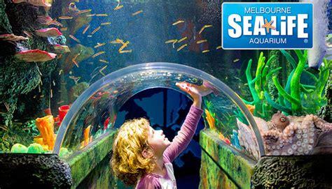 50 melbourne sea aquarium deals reviews coupons discounts