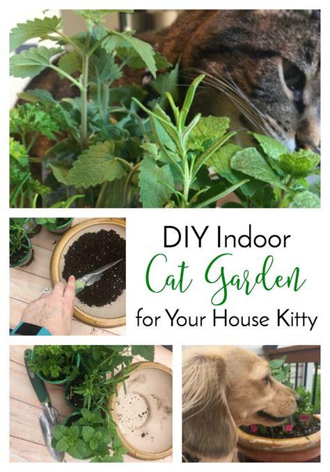 best 25 cat garden ideas on cat grass cat