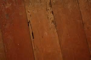 termite damage on hardwood floors