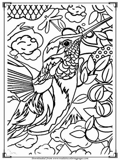 Coloring Birds Printable Adults Colour Detailed Adult