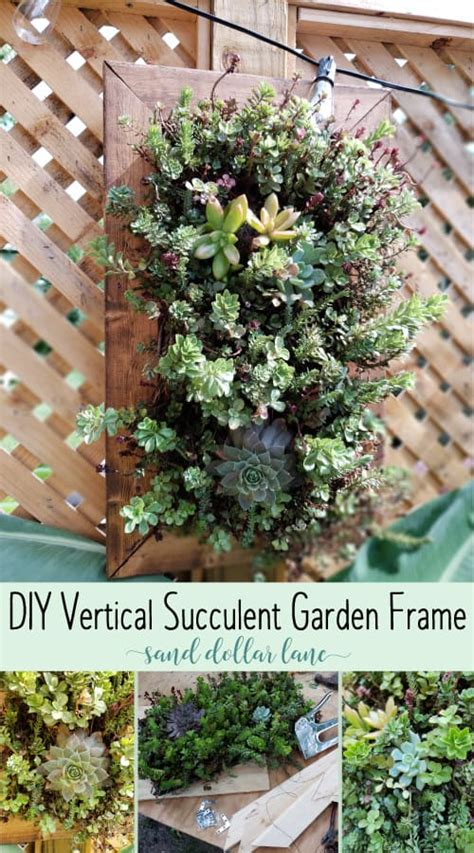 How To Build A Vertical Garden Frame by How To Build A Vertical Succulent Garden Sand Dollar