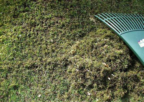 Rasenpflege Im Herbst Vertikutieren by Vertikutieren Moos Ausharken Im Maerz Oder Vertikutierer