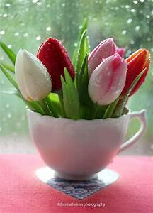 Langage Des Fleurs Pivoine : tulips fleurs ~ Melissatoandfro.com Idées de Décoration