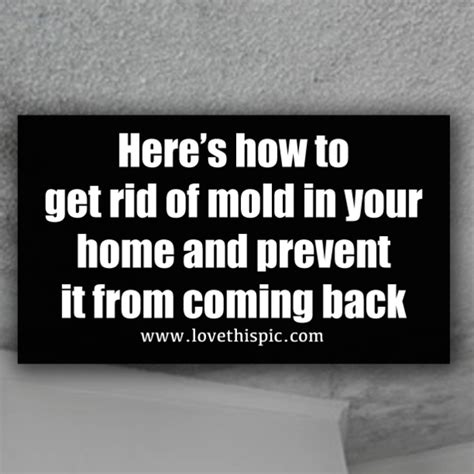 here s how to get rid of mold in your home and prevent it