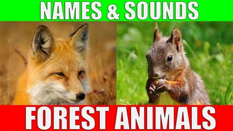 Forest Animals Video for Kids Children Learn Forest