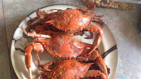 crabs eat steamed