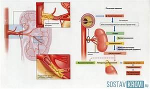 Почечная гипертония причины симптомы и лечение