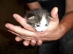Rasengittersteine Zu Verschenken : s sse babykatzen zu verschenken ~ Michelbontemps.com Haus und Dekorationen