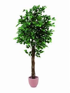 Ficus Benjamini Verliert Alle Blätter : europalms ficus benjamini multi stamm 180cm ~ Lizthompson.info Haus und Dekorationen