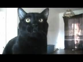sylvester the talking cat talking kitty cat 18 no kitty food