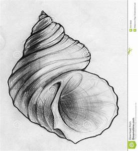 Done Sea Shell Sketch Stock Illustration - Image: 44318008 ...