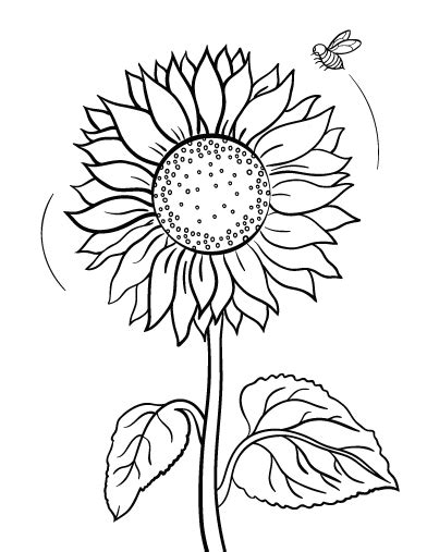Free Sunflower Coloring Page