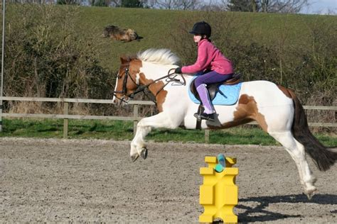 jumping riding pony horse secure drama three jack brown secrets fell started ponymag straight
