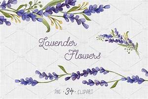 Watercolor set with Lavender Flowers ~ Illustrations ...