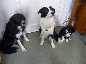 Cornwall home dog boarding for Dog home boarding near me
