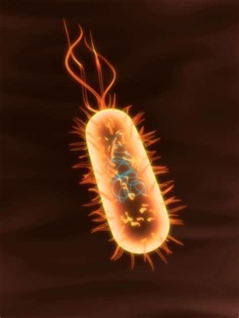 bacteria reproduce