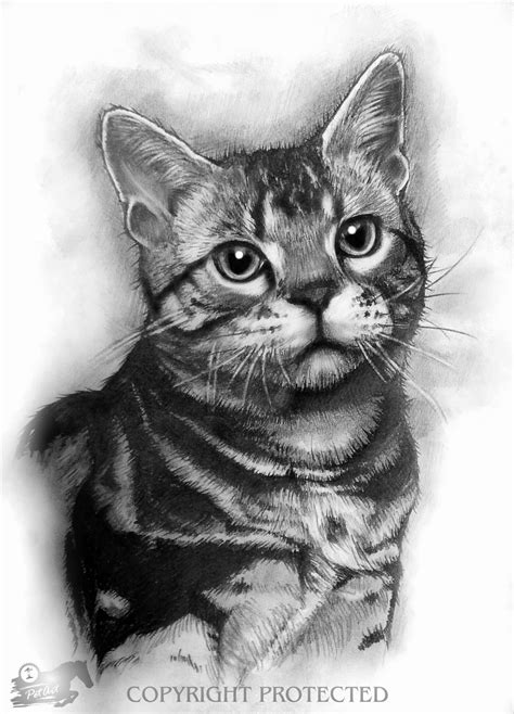 realistic animal drawings november