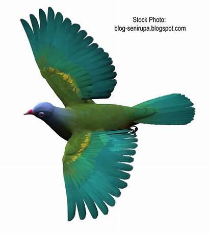 Burung Gambar Lovebird Resolution Klik Sumber Kicau