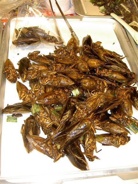 deep fried cockroaches part  annies cooking