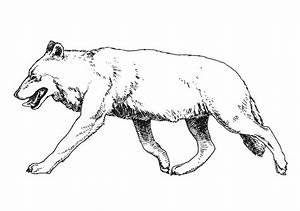 Coloriage Loup Imprimer
