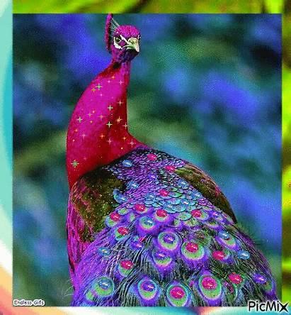 Peacock Colorful Picmix