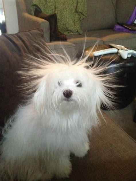 animals    incredible hair