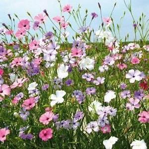 Herbstliche Blumenkästen Bilder : 86 besten tr ge und blumenk sten bilder auf pinterest ~ Lizthompson.info Haus und Dekorationen
