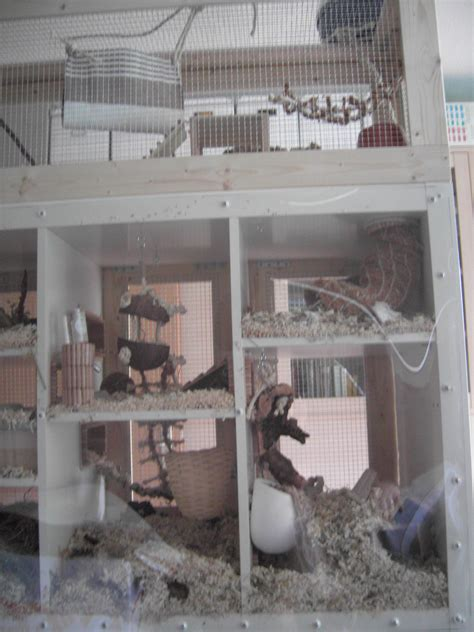 mouse cage  aquarium tank construction