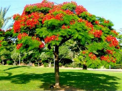 trees suitable for planting near houses which are the trees suitable to plant around our house quora