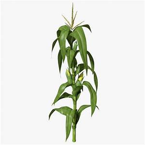 Corn stalk max for Corn stalk template