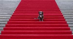 Rote Haselnuss Kaufen : rote teppich kaufen deutsche dekor 2018 online kaufen ~ Michelbontemps.com Haus und Dekorationen