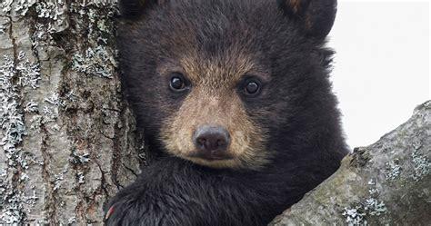baby bear 4k ultra hd wallpaper Cute animals Animals