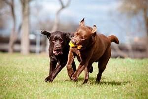 Папилломы лап у собак лечение