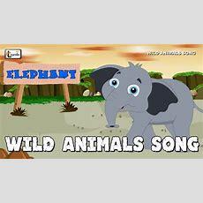 Wild Animals Song  Zoo Animals For Children  Elearnin Youtube