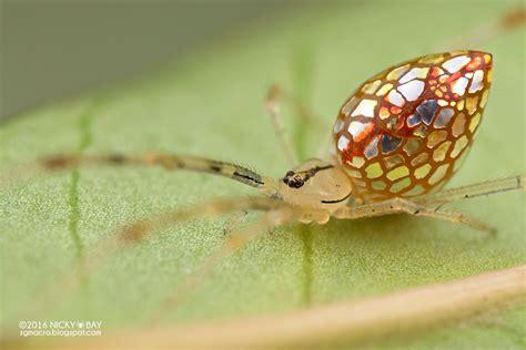 araign馥 dans la chambre les araignées réfléchissantes de nicky bay chambre237