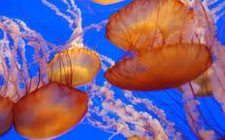 Beautiful Sea Animals Jellyfish