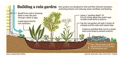 building  rain garden   creative    pollution